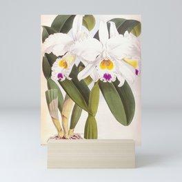 Vintage White Lindenia Orchid Mini Art Print