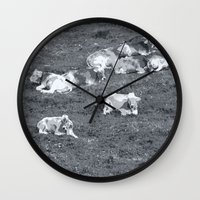 cows Wall Clocks featuring Cows by Mr and Mrs Quirynen
