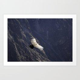 Condor Art Print