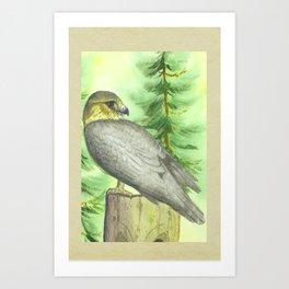 Merlin Falcon Art Print