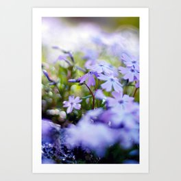 Modern Minimalist Nature Photography Close Up Of Purple Flower Natural Organic Shapes Art Print Art Print