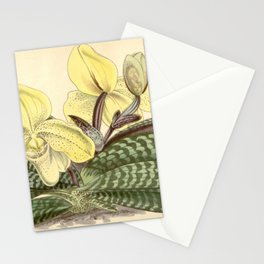 Paphiopedilum concolor Stationery Cards