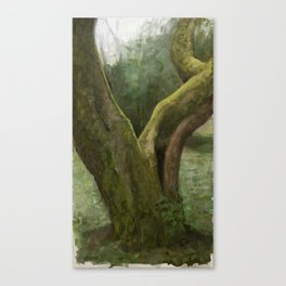 Moss covered tree in Issaquah, WA Canvas Print