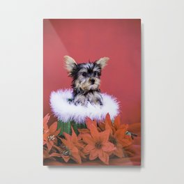 Yorkie Puppy Sitting in a Green Christmas Basket Surrounded by Poinsettia Metal Print