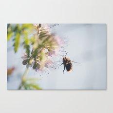 beelanding Canvas Print