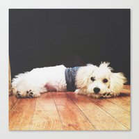 chuck Canvas Prints featuring Chuck by courtneeeee