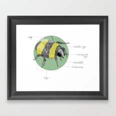 Banatomy. Framed Art Print