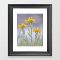 Wild Summer Iris Framed Art Print