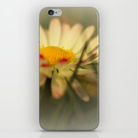 daisy iPhone & iPod Skins featuring Daisy by Falko Follert Art-FF77