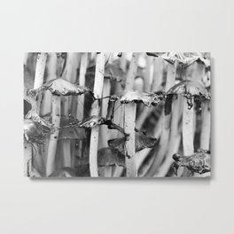 Shaggy Ink Cap Mushrooms 11 Metal Print