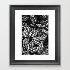 Variagated Framed Art Print