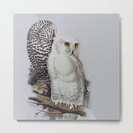 Snowy Owls by Edward Lear Metal Print