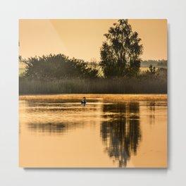 Golden morning Metal Print