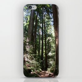 Redwood Lined Path iPhone Skin