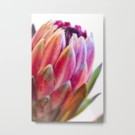 Protea Flower II Metal Print