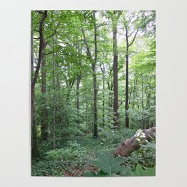 Forest dreaming Poster