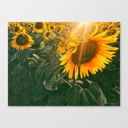 summer in the fields Canvas Print