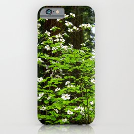 Flowering Dogwood, McKinley Grove, California iPhone Case