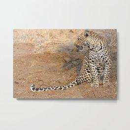 cheeta Metal Print