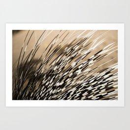 Quills Art Print