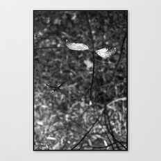 sprouting.. Canvas Print