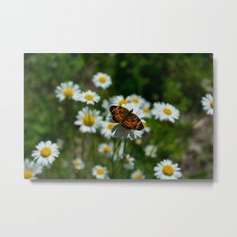 butterfly in the daisies Metal Print