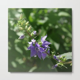 There were bells - Campanula americana Metal Print