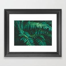 Ferns II Framed Art Print