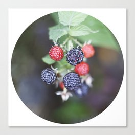 black berry Canvas Print