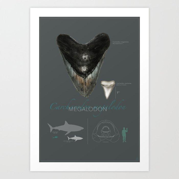 Megalodon Art Print