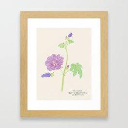 Botanical Sketches 5: Common Mallow Framed Art Print