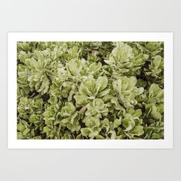 Hawaii Foliage Art Print