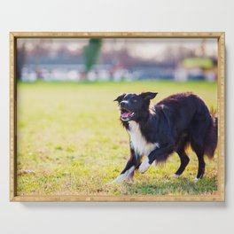 playing Collie Serving Tray