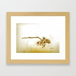 What the Bloom Framed Art Print