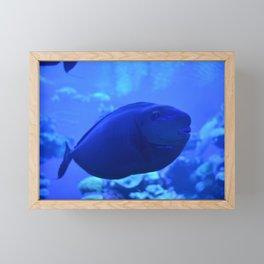 Sad blue fish Framed Mini Art Print