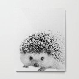 Hedgehog Metal Print