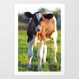 Baby Calf Art Print