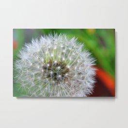 Dandelion Clock Metal Print