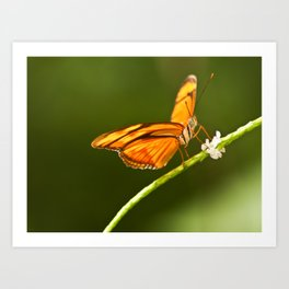 Flamed Butterfly Art Print