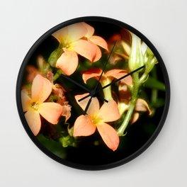 Kalanchoe Blossfeldiana 1 Wall Clock