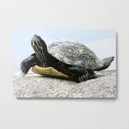 water turtle Metal Print