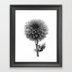 Dahlia - Monochrome Framed Art Print
