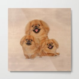 Pekingese dogs collage Metal Print