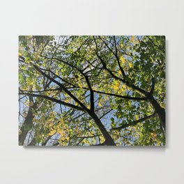 Summer Trees - Nature Photography Metal Print
