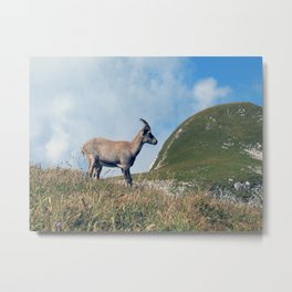 Ibex while hiking Metal Print