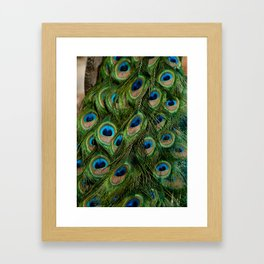 Peacock Eyes Framed Art Print