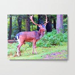 Deer in woods / Nature photography / Elk Art Print / Germany/ Animal/ Wild life Metal Print