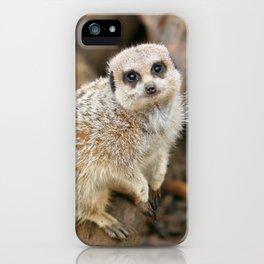 Cute Meerkat looking at camera iPhone Case