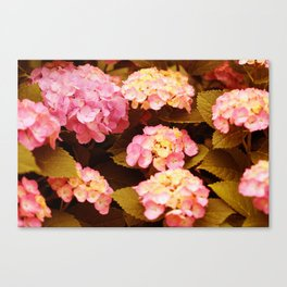 Lovely season Canvas Print