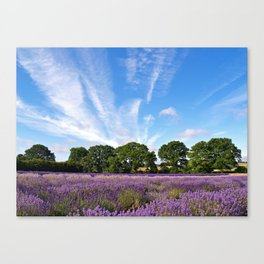 Lavender Fields near Selborne Canvas Print